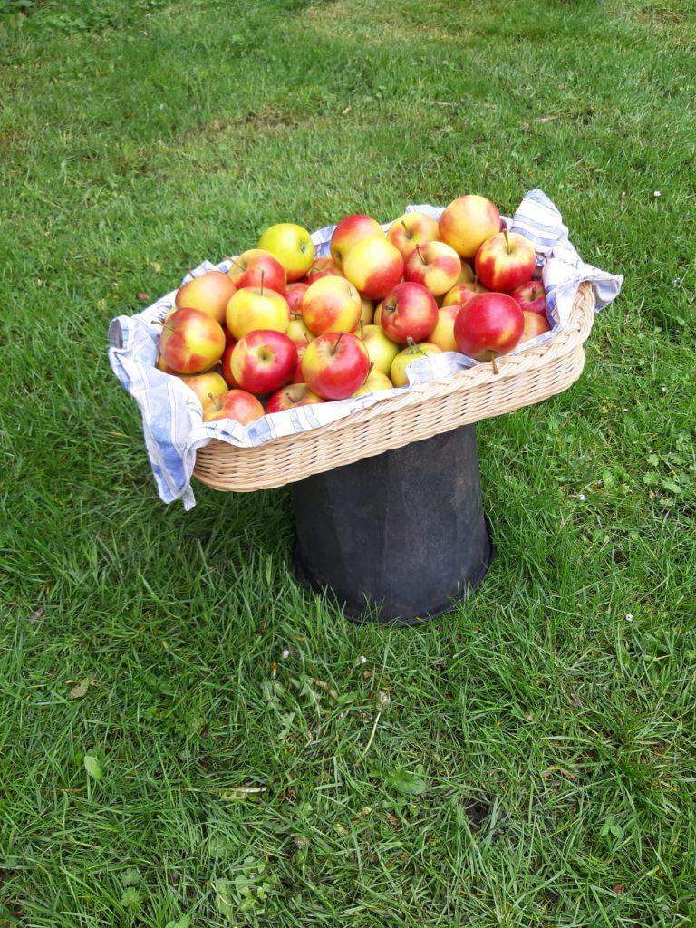 Äpfel als Verpflegung